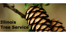 Illinois Tree Service in Plainfield, IL
