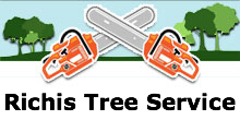 Richis Tree Service in Denver, CO
