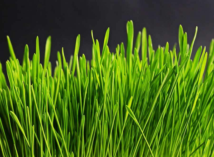 Alternatives To A Grass Lawn