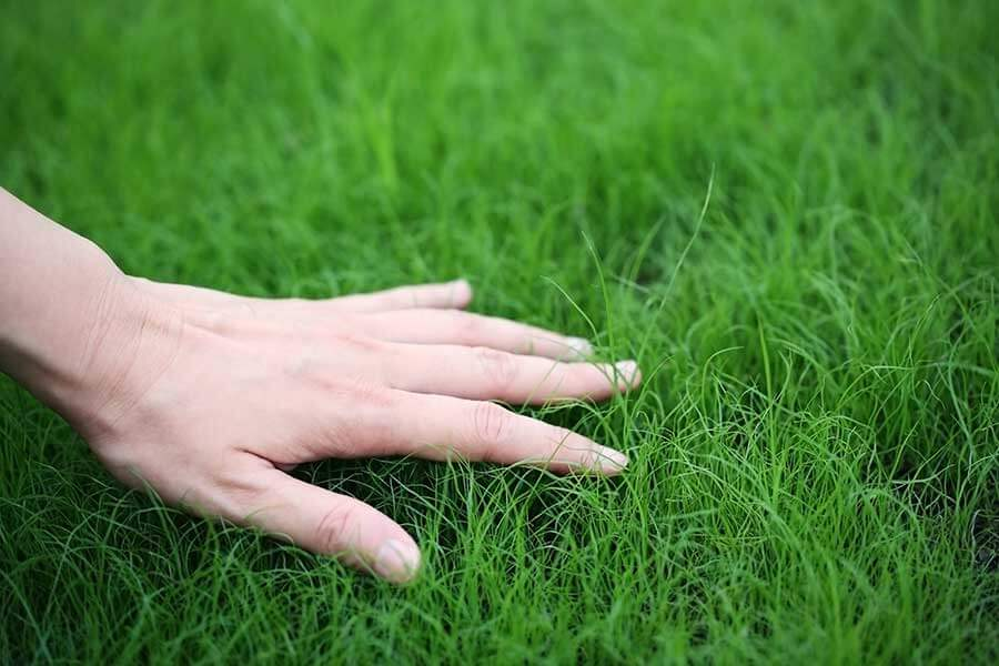 closeup of hand inspecting lawn